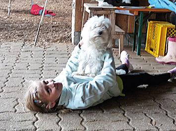 Stallhund Anton